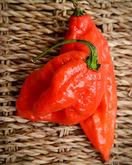 World Record Holder Butch T Variant Trinidad Scorpion Heirloom Pepper Premium Seed Packet