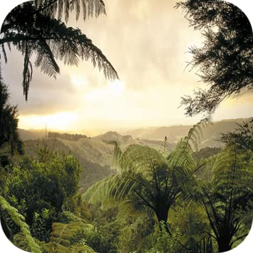 Amazoncom Forest 4k Wallpaper Appstore For Android