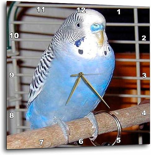 3dRose 3D Rose Blue Parakeet-Wall Clock, 13-inch DPP_983_2
