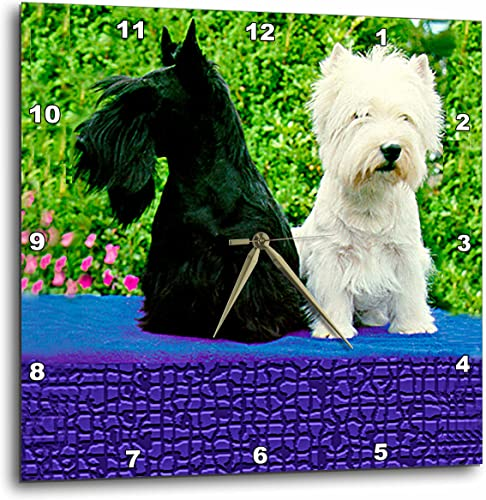 3dRose Dogs Scottie and Westie – Scottie and Westie – 10×10 Wall Clock DPP_506_1