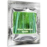 """BAMBOU GEANT MOSO env. 60 graines / Phyllostachys pubescens / """"Roi des Bambous"""""""