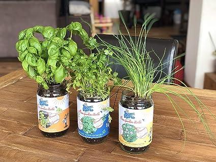Blue Farmers Herbes Aromatiques Cultivez Votre Coriandre