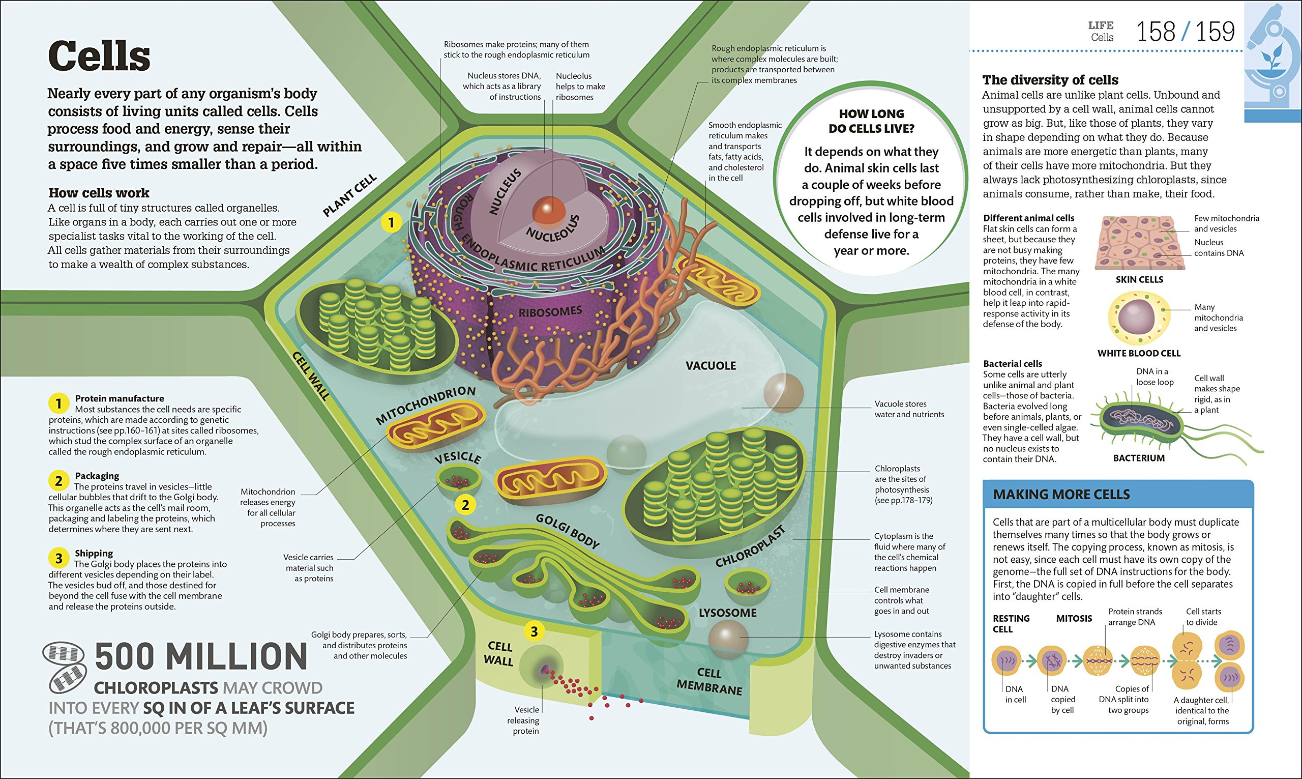 How Science Works The Facts Visually Explained Things Work 3d Plant Cell Diagram From Textbook Image Gallery Dk 9781465464194 Books