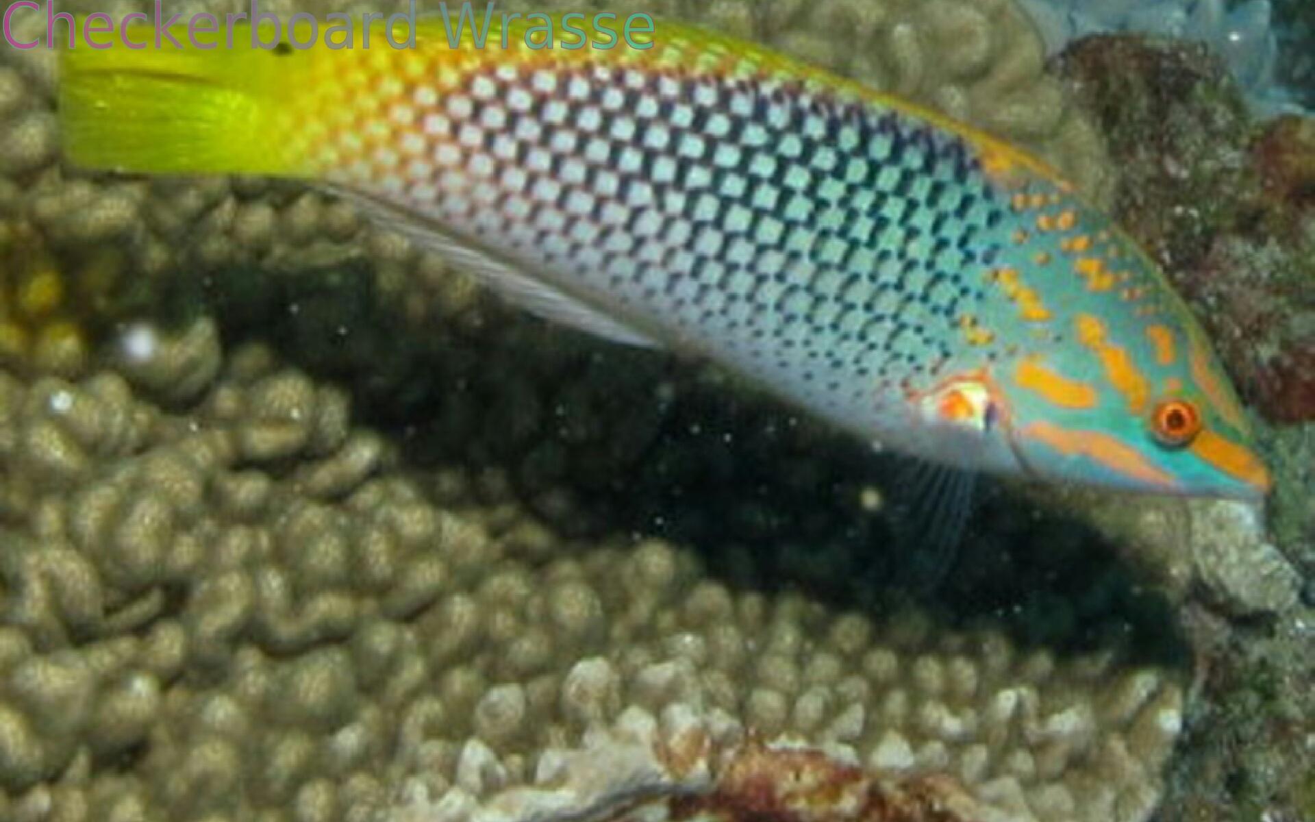 Marine aquarium fish appstore for android for Amazon aquarium fish