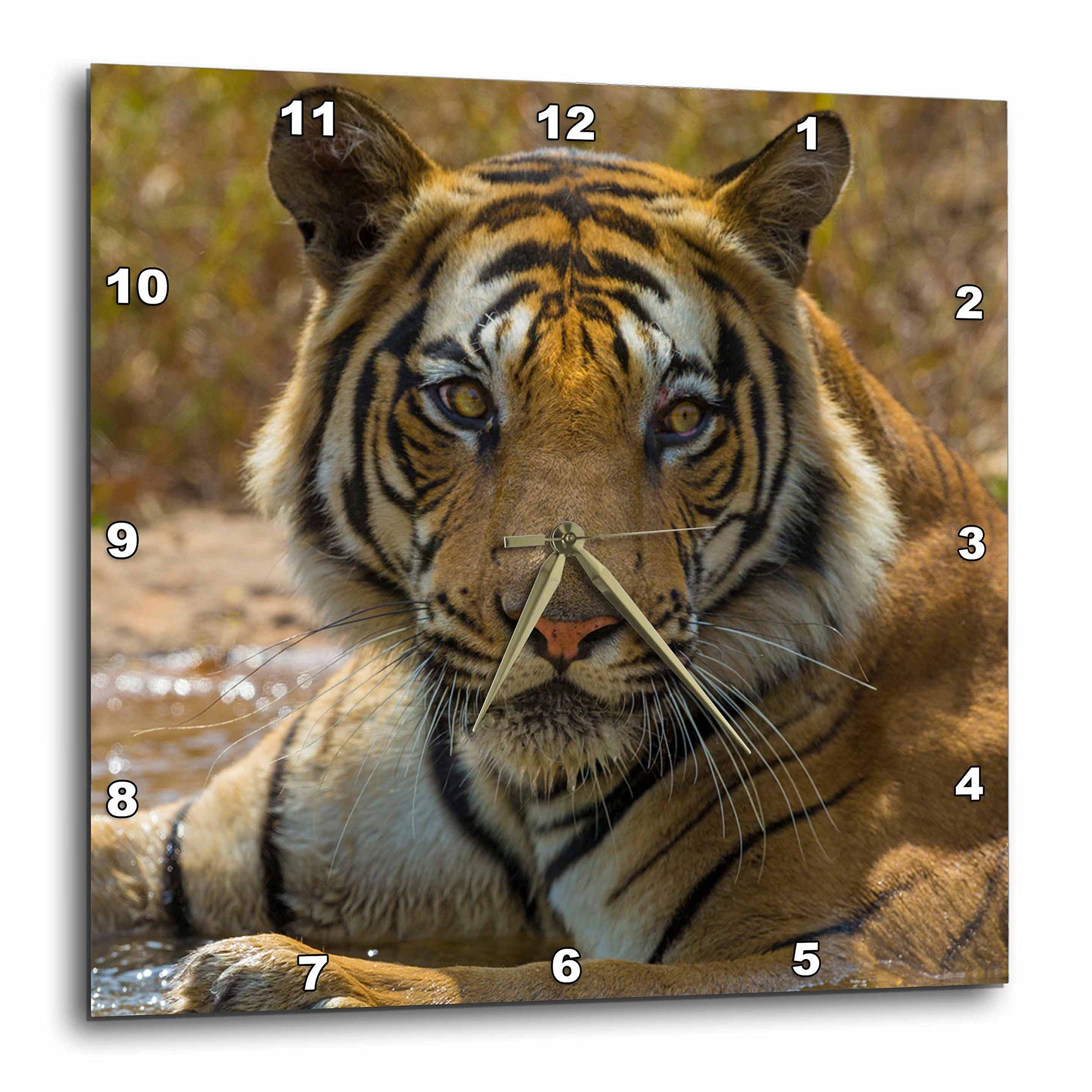 3dRose India Bandhavgarh Reserve, Bengal Tiger Resting in Water Wall Clock, 15'' x 15''