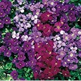 10 AUBRETIA ROYAL SERIES MIXED MEDIUM PLUG PLANTS - HARDY PERENNIAL