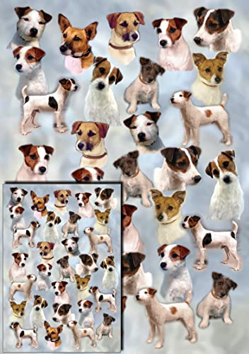 Jack russell puppy birthday card super pup amazon kitchen parson russell jack russell terrier dog gift wrapping paper with small gift card design by bookmarktalkfo Image collections