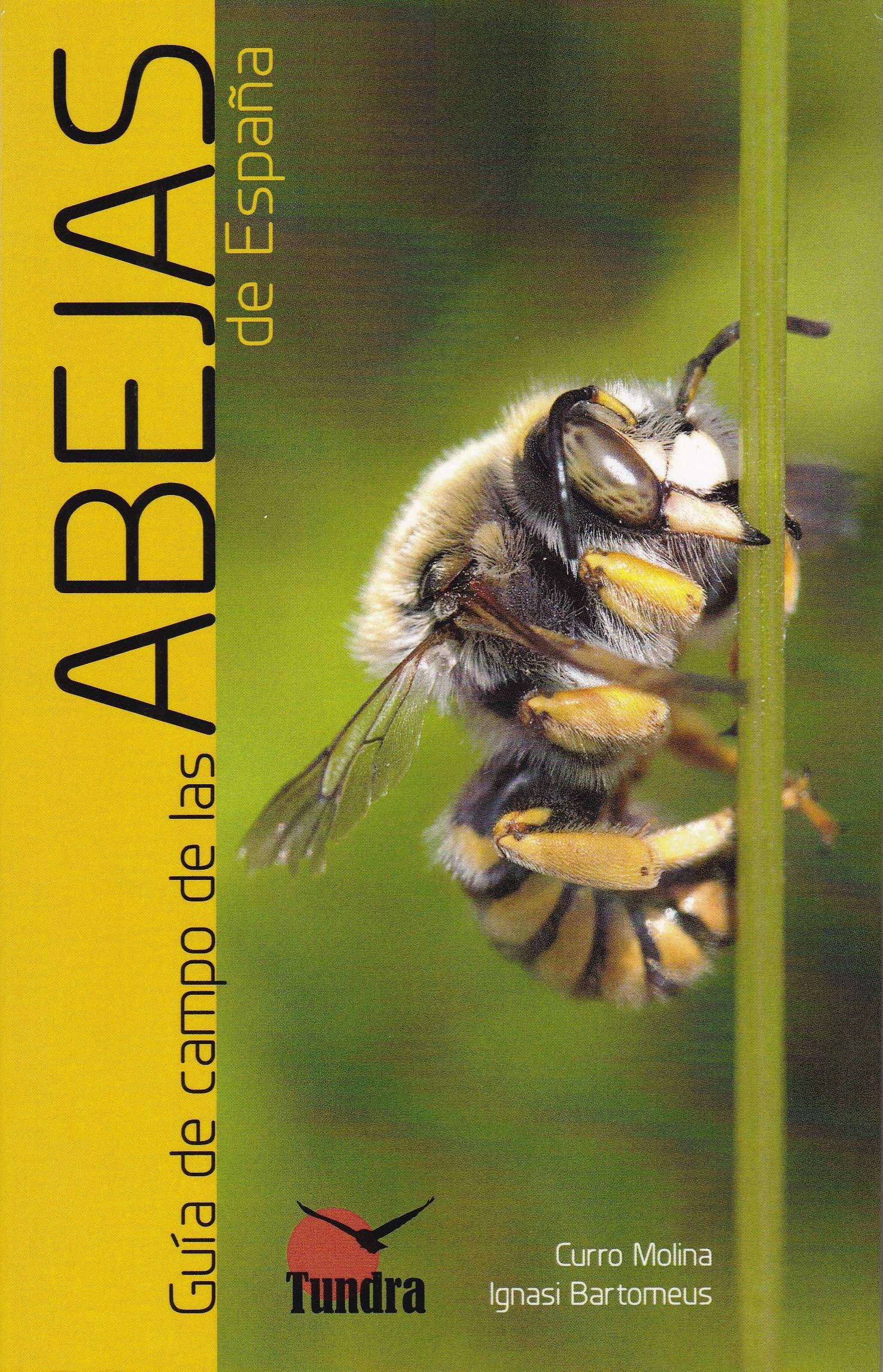 Guía de campo de las abejas de España: Amazon.es: Curro Molina ...
