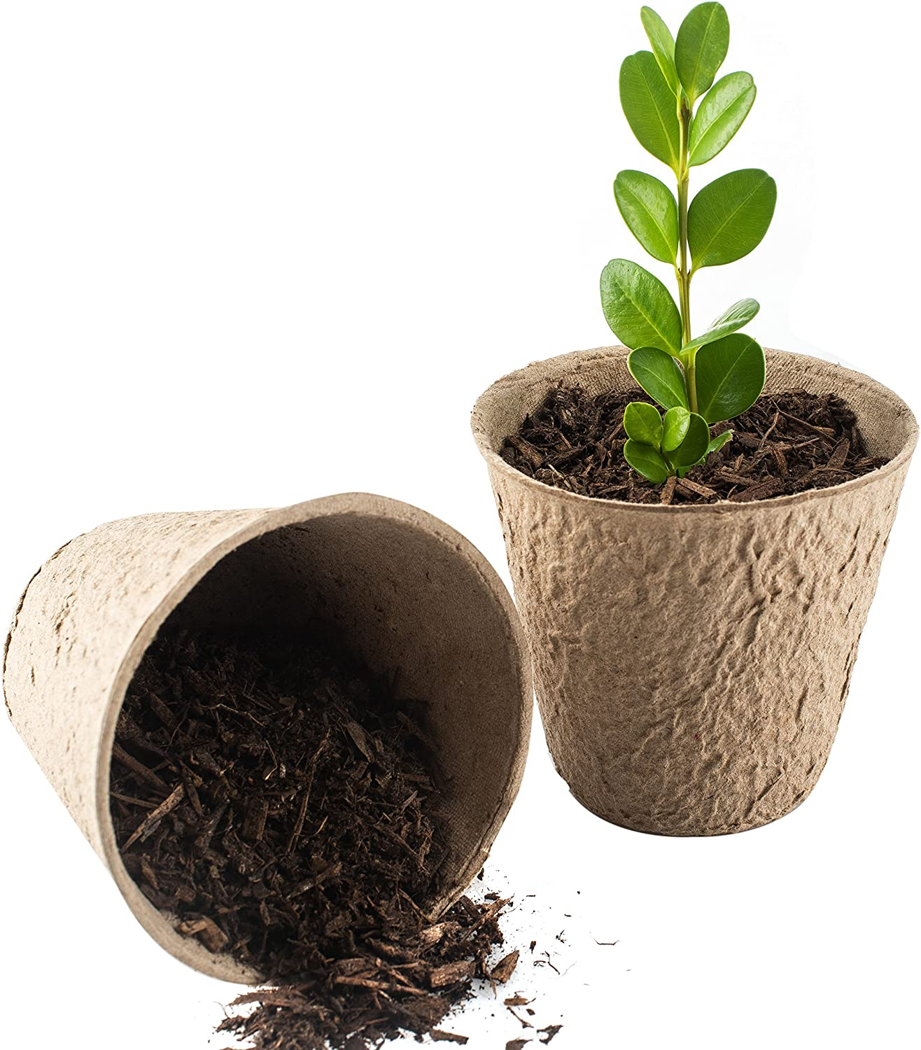 3-inch Peat Pots Pack of 50 Seed Starter Pots 30 Free Plant Markers Biodegradable Peat Pots for Seedlings No Transplant Shock with Seedling Starter Pots