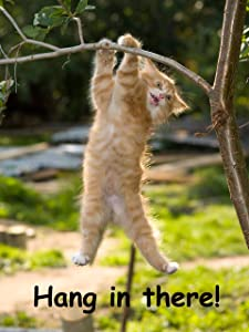 Hang in There Cat Poster - Printed on Premium Cardstock Paper - Sized 11 x 14 Inch - Perfect Funny Motivational Poster For Home or Office - Humorous Decor, Funny Quote