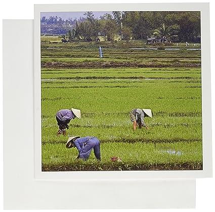 Amazon 3drose greeting cards rice paddy hoi an vietnamese 3drose greeting cards rice paddy hoi an vietnamese farmer gc695631 m4hsunfo