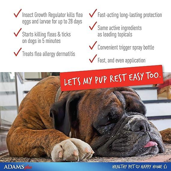 Adams Plus pulgas y garrapatas Spray para Gatos y Perros: Amazon.es: Productos para mascotas