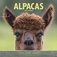 Alpacas Calendar 2019