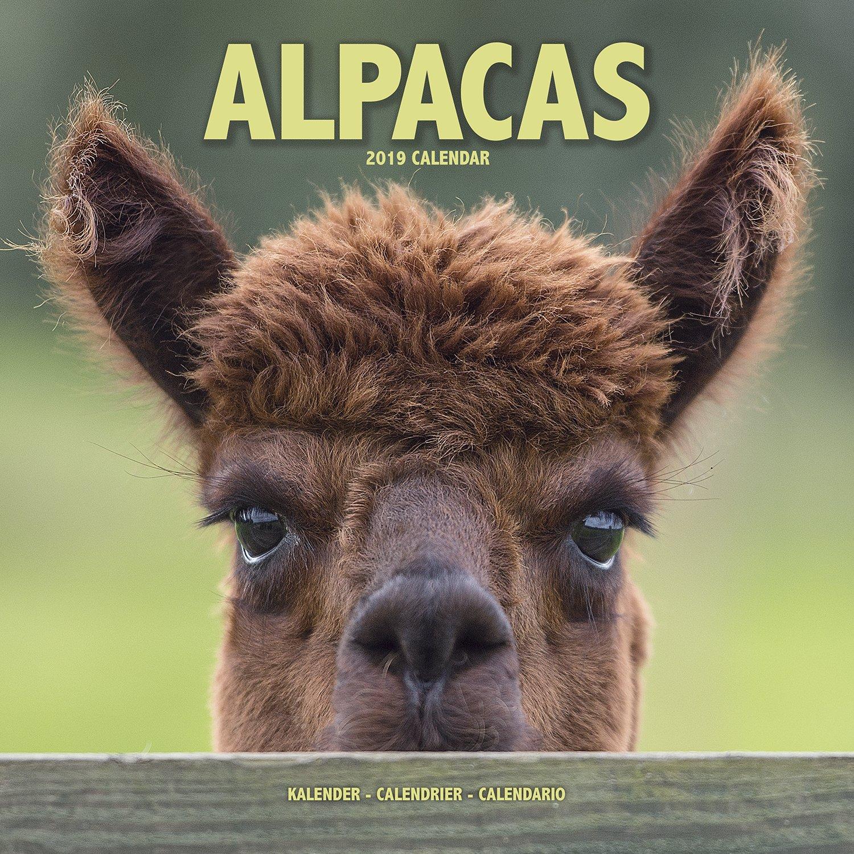 Download Alpaca Wall Calendar - Cute Animal Calendar - 2019 Wall Calendar - 2018 Calendars - 16 Month Wall Calendar by Avonside PDF