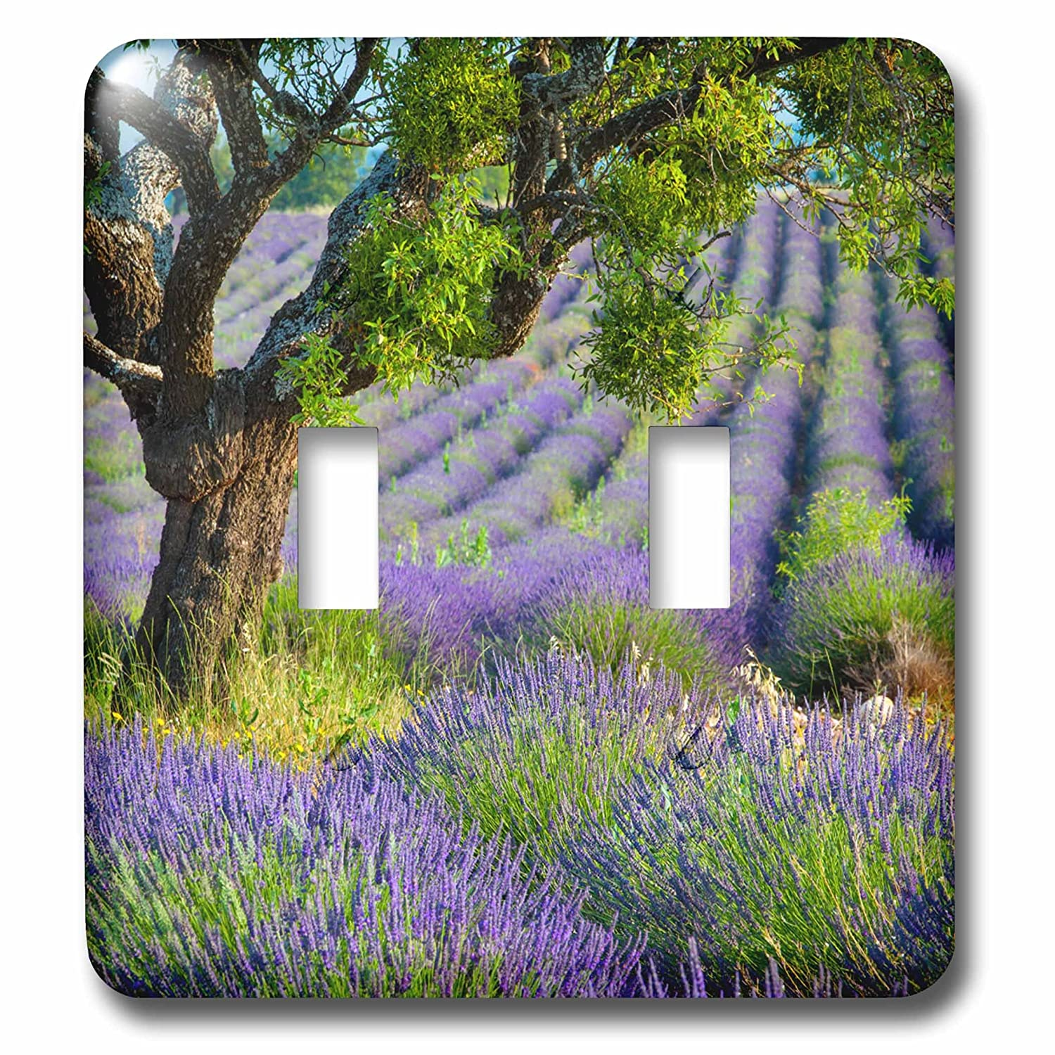 Valensole Plateau France Toggle Switch Multicolor Provence 3dRose lsp/_277366/_2 Tree in Purple Field of Lavender