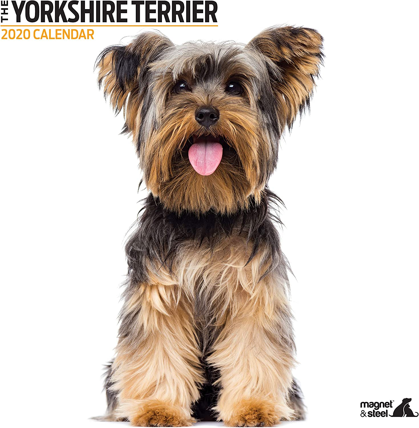 Yorkshire Terrier Modern 2020 Calendar Amazon Co Uk Office Products
