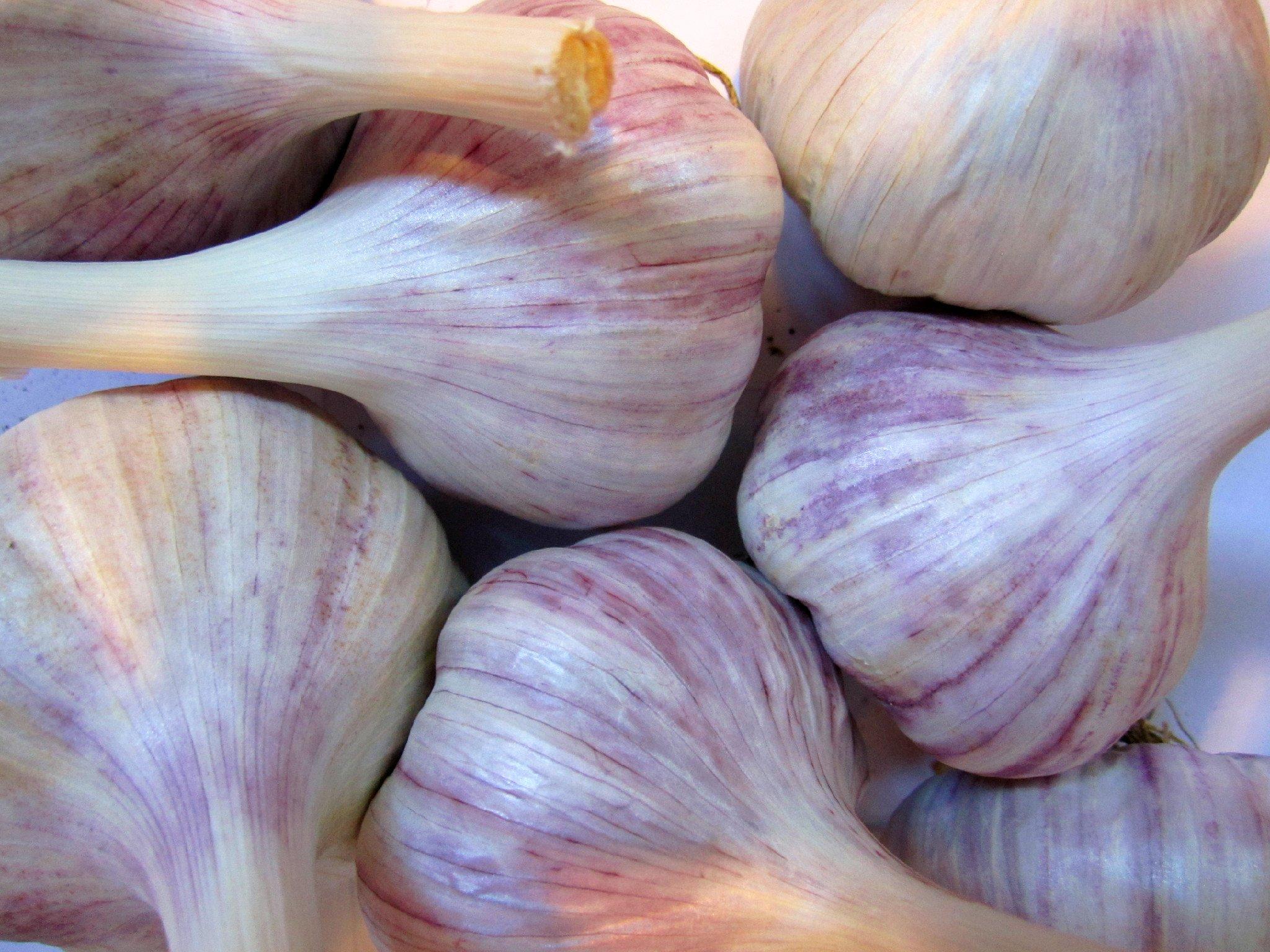 Persian Star Heirloom Garlic (5 Pound) Organic Gourmet Hardneck Garlic Bulbs by Marvelous Roots