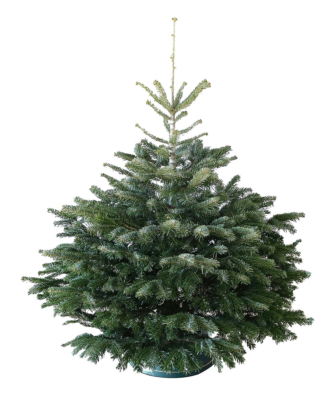 Echter Weihnachtsbaum Nordmanntanne H=ca. 1,25-1,40 m Premium frisch ...