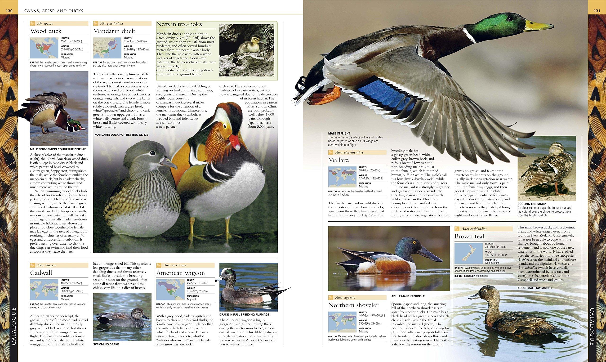 The Illustrated Encyclopedia of Birds. (Dk): BirdLife International ...