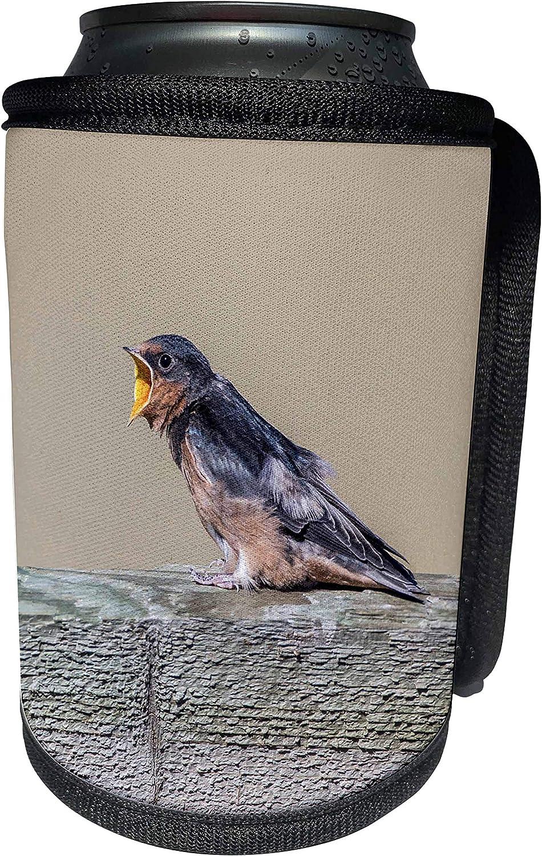 3dRose Danita Delimont - Birds - USA, Montana, Barn Swallow fledgling begging for food - Can Cooler Bottle Wrap (cc_231112_1)