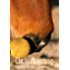 Clickertraining: Positive Bestärkung in der Pferdeerziehung
