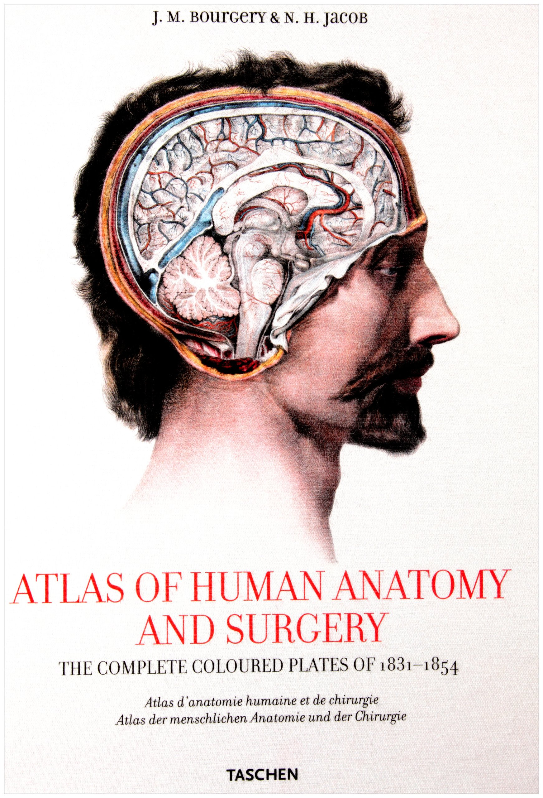 Bourgery, Atlas of Anatomy: Amazon.co.uk: Jean-Marie Le Minor, Henri ...