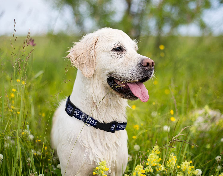Pet Care Preferred San Francisco 49ers Nylon Collar Large