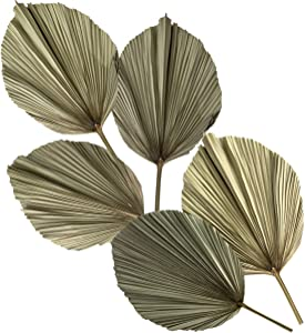 Made Terra 5 Palm Leaves Dried, Tropical Palm Leaves Decoration, Dried Natural Leaves for Tropical Wedding Decor, Leaves Decorations