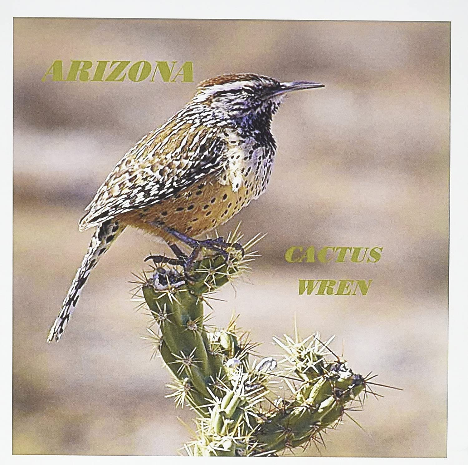 3drose Gc 50933 1 6 X 6 Inch State Bird Of Arizona Cactus Wren Greeting Card Pack Of 6 Amazon Co Uk Office Products