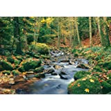 Ideal Décor DM278 Forest Stream 144-Inch-by-100-Inch 8-panel mural