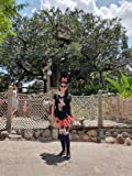 New Balance Disney Minnie