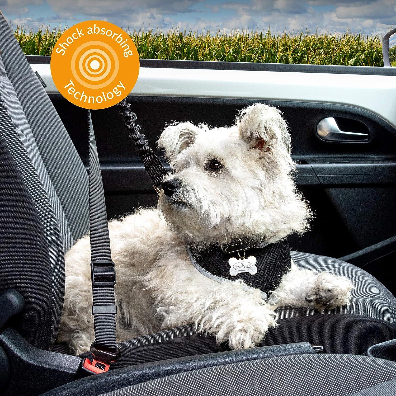 Accessorio da Viaggio Perfetto Resistente agli Urti 25 kg Cintura di Sicurezza per Cani e Gatti con Cintura di Sicurezza Regolabile Comoda da Usare PawPride