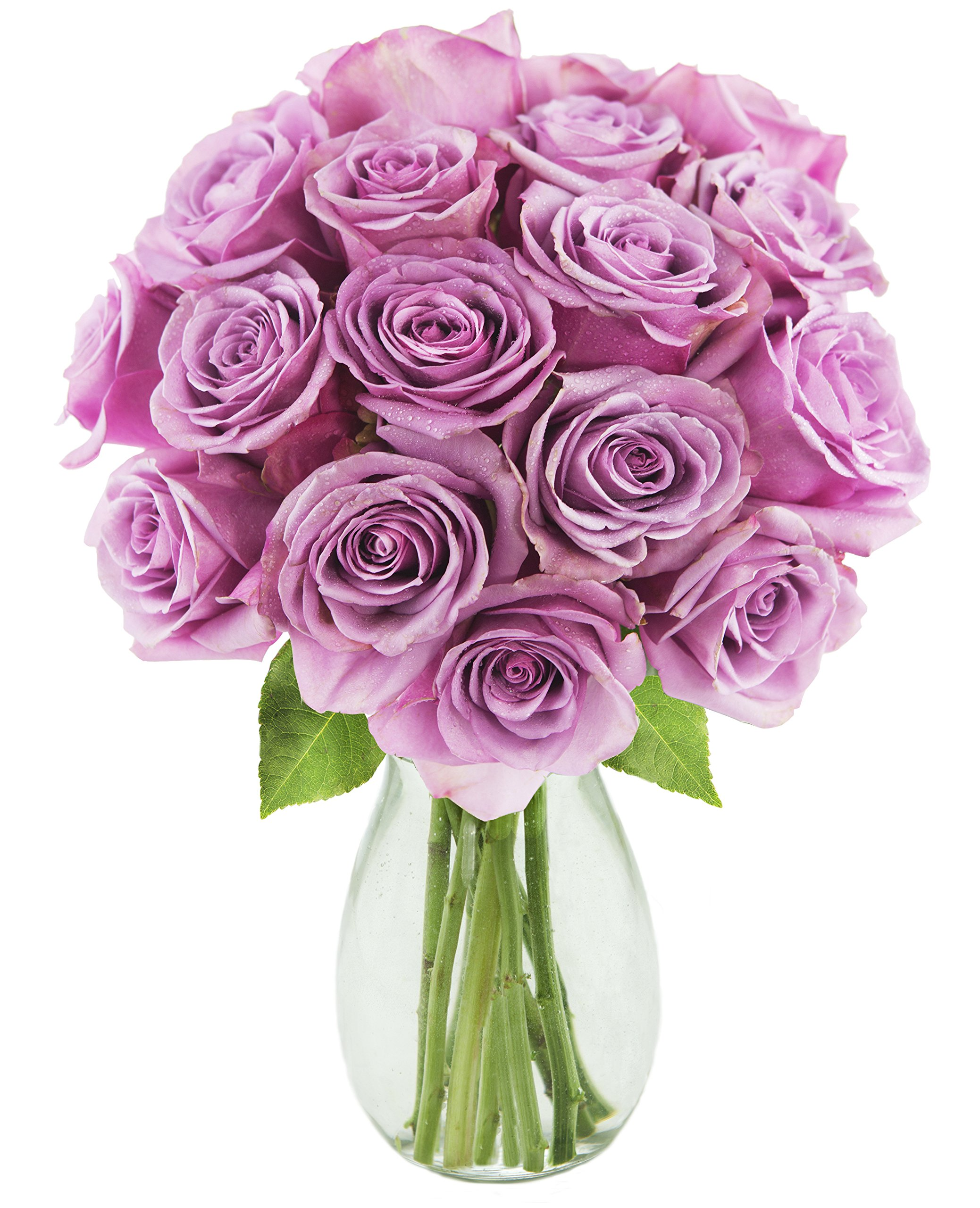 Bouquet of 18 Fresh Cut Purple Roses (Farm-Fresh, Long-Stem) with Free Vase Included