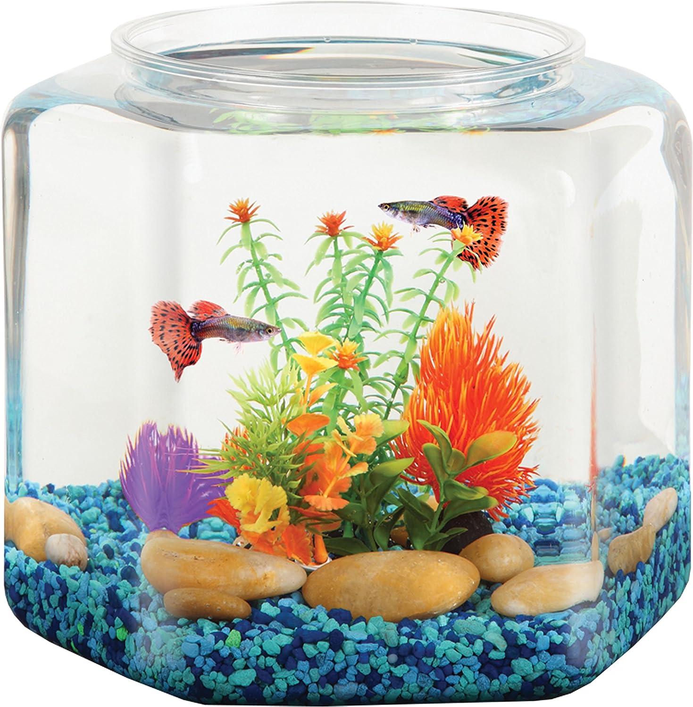 Amazon Com Koller Products Bettatank 2 Gallon Hex Fish Bowl Pet Supplies