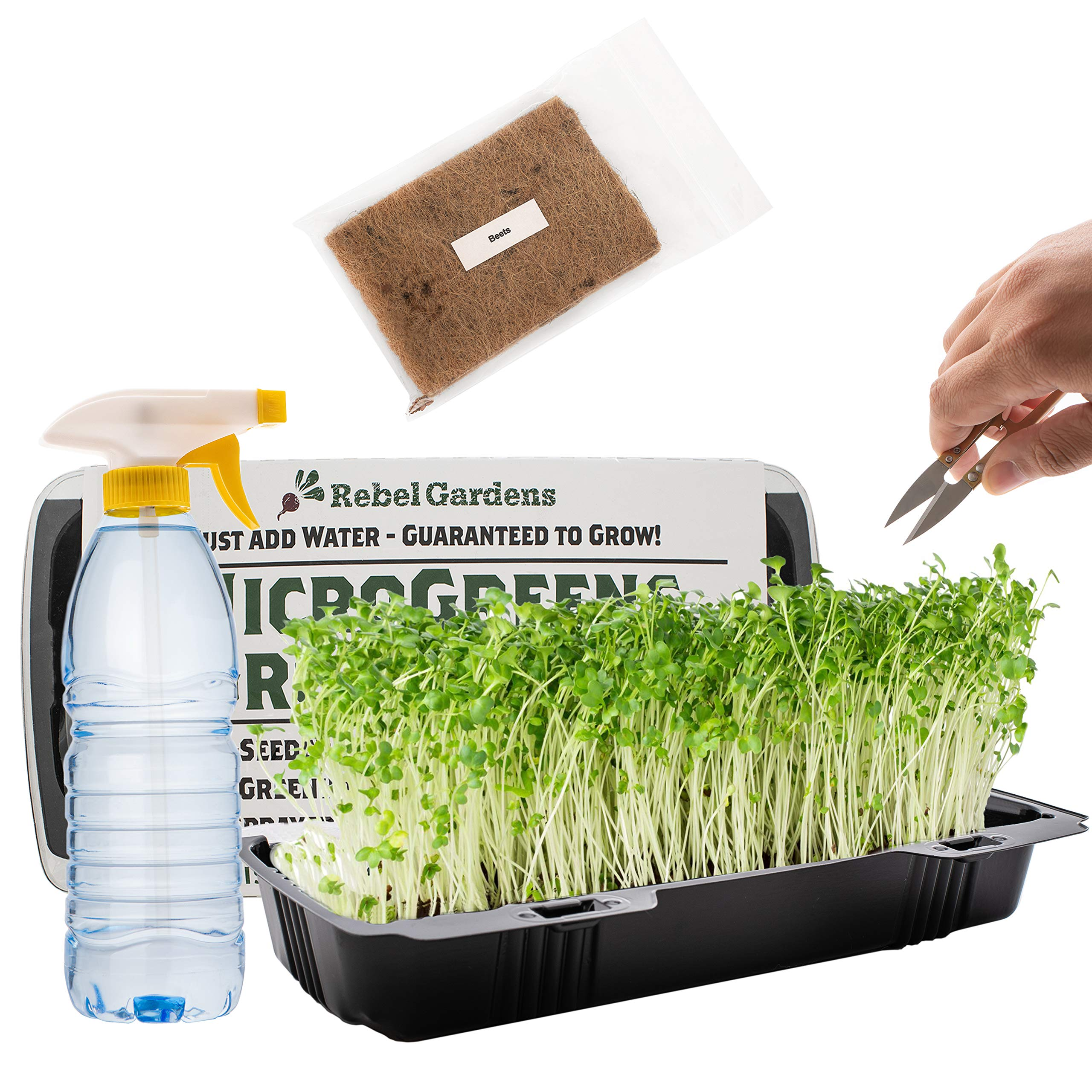 Microgreens Growing Kit - Organic Non GMO Seeds - Indoor Sprouting Greenhouse Tray - Radish Beets Kale Broccoli by Rebel Gardens