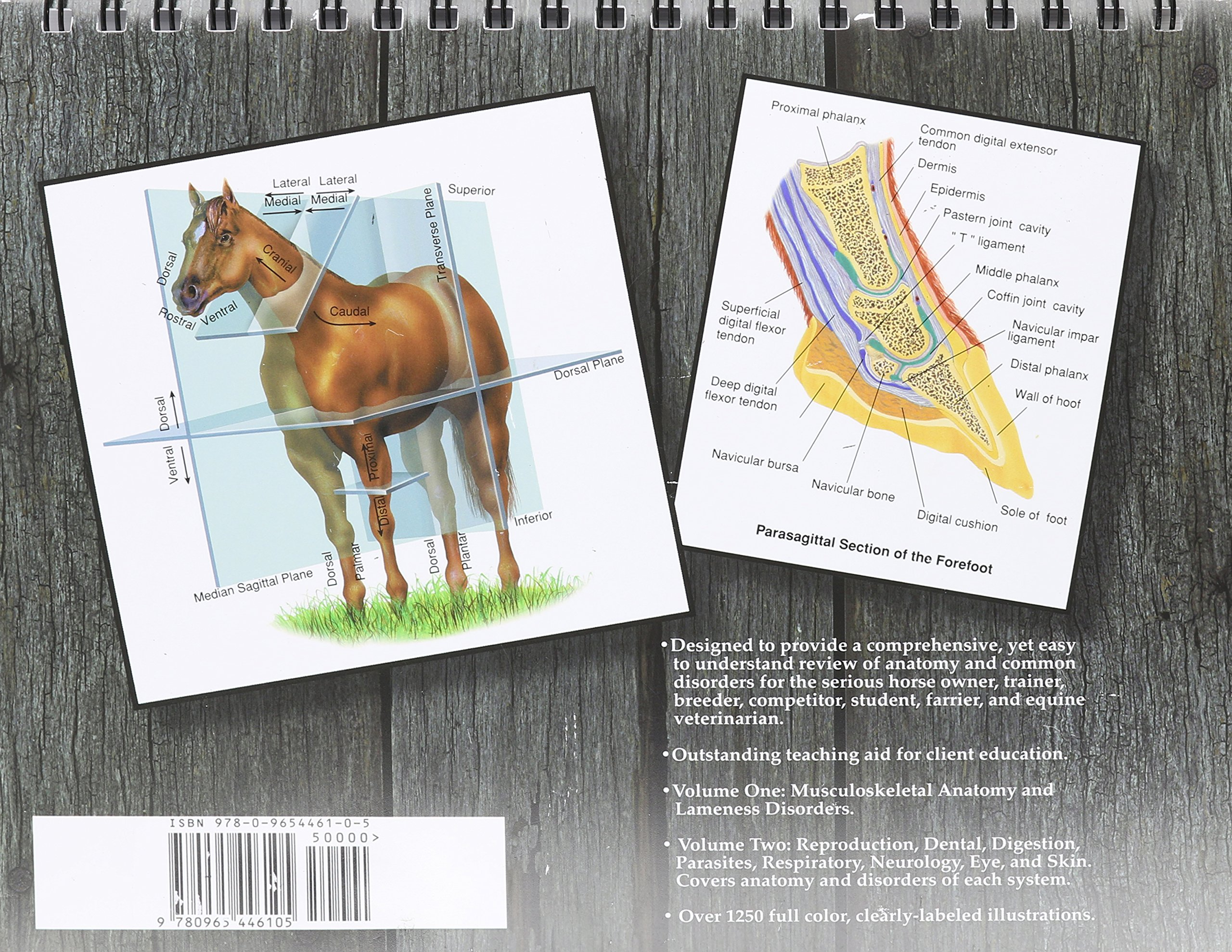 Illustrated Atlas of Clinical Equine Anatomy and Common Disorders of ...