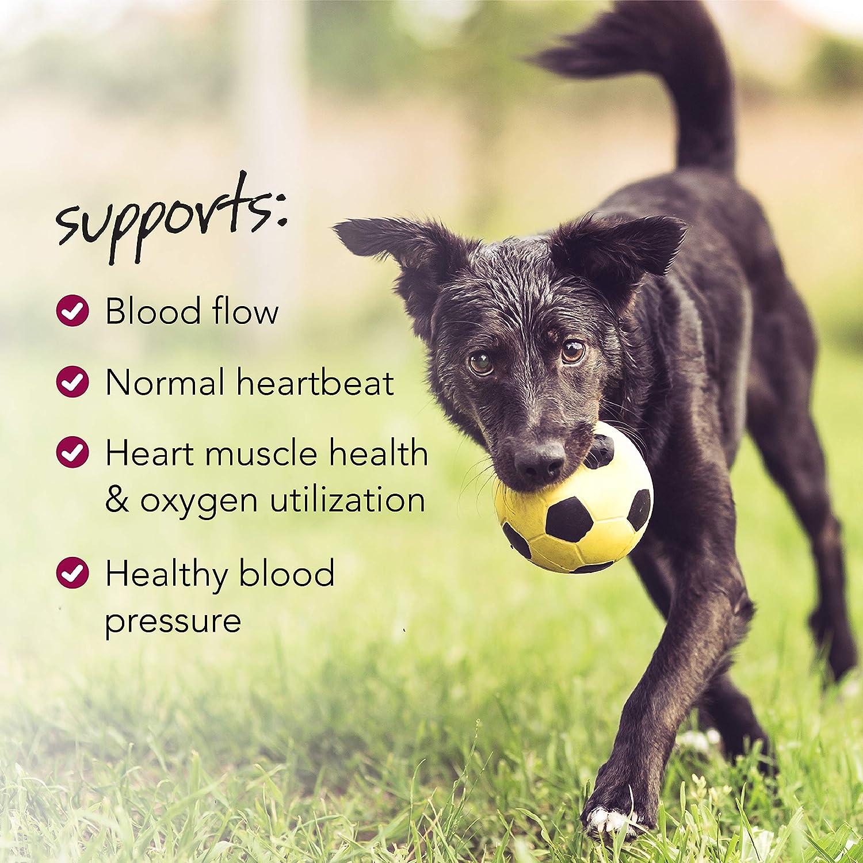 VetriScience Laboratories – Vetri Cardio Canine, Cardiovascular Health Support, 60 Bite-Sized Chews