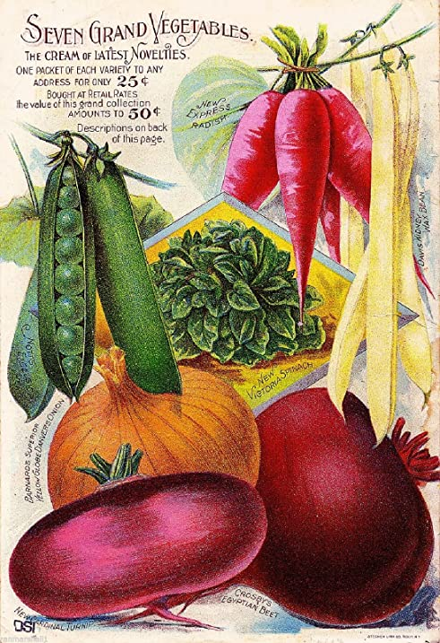 Barnard Seven Vintage Vegetable Seed Packet Catalogue Travel Advertisement  Poster
