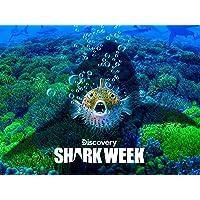 Discovery Channel Shark Week Season Digital HD Deals