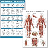 QuickFit Bodyweight Workouts and Muscular System Anatomy Poster Set - Laminated 2 Chart Set - Body Weight Exercise Routine &