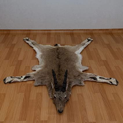 Amazon Com Siberian Ibex Taxidermy Rug Mount With Head Wild