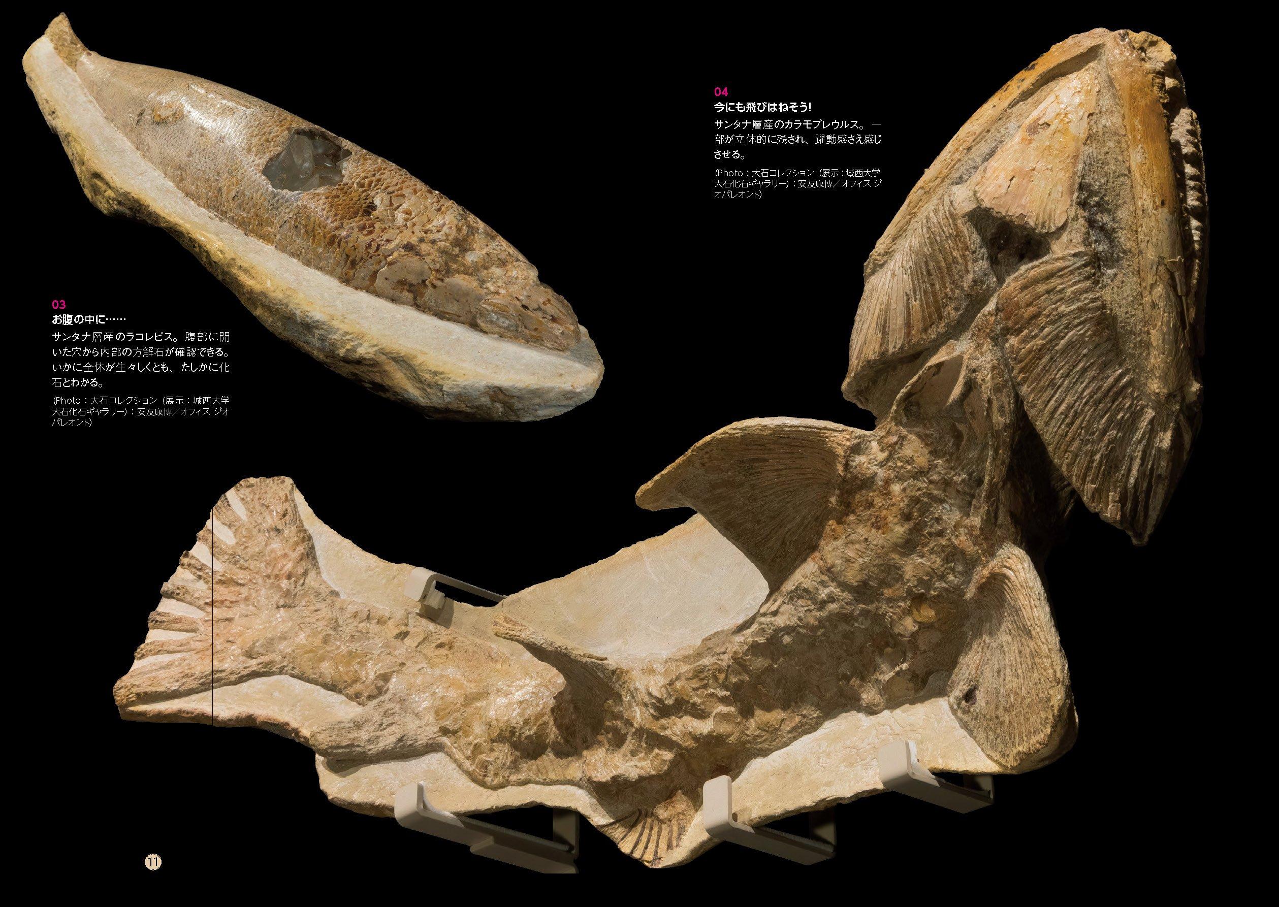 化石になりたい よくわかる化石...