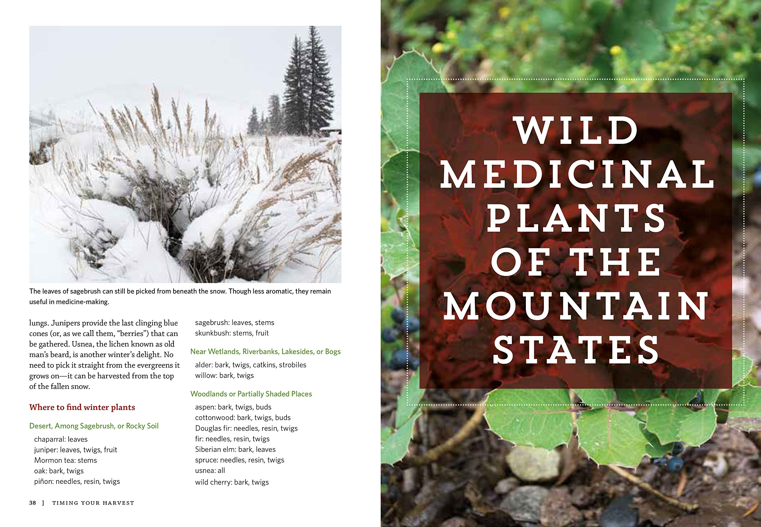 Mountain states medicinal plants identify harvest and use 100 mountain states medicinal plants identify harvest and use 100 wild herbs for health and wellness briana wiles 9781604696547 amazon books fandeluxe Image collections