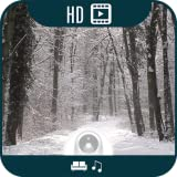 Winter Forest HD