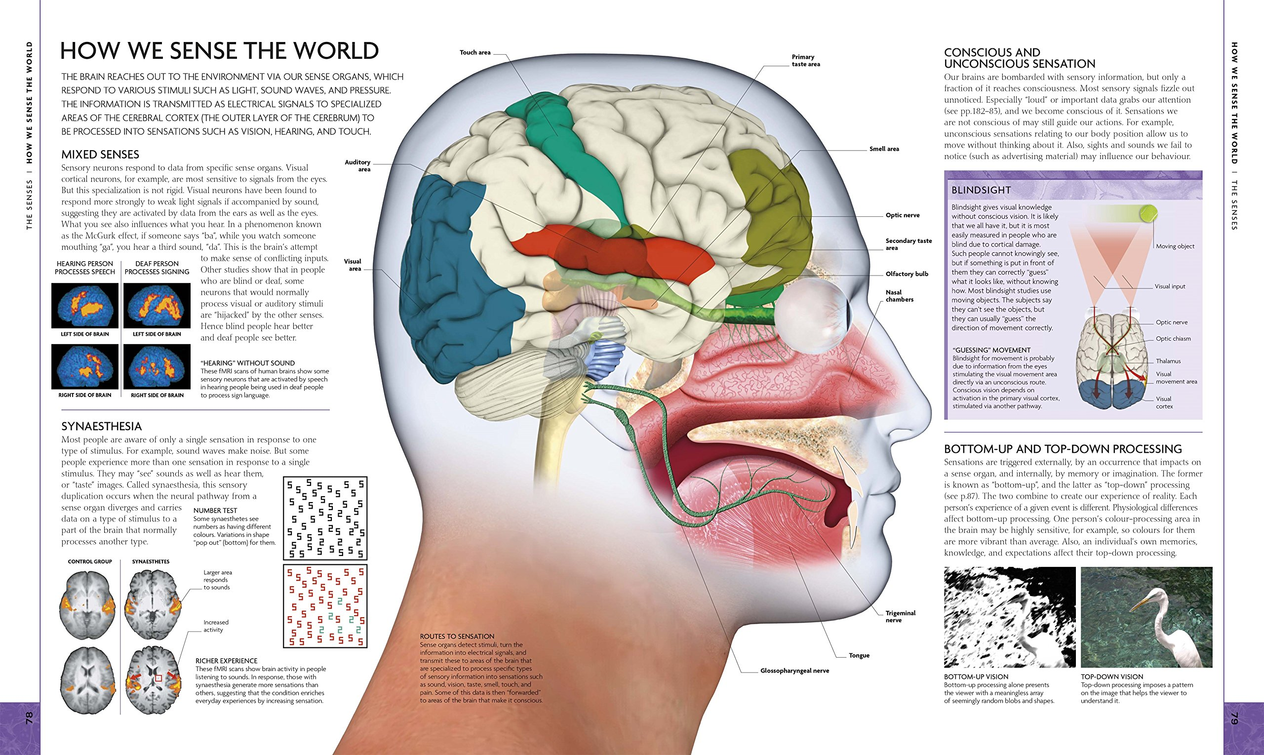 The Brain Book An Illustrated Guide To Its Structure Functions