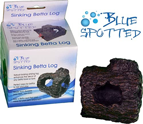 blue-spotted-betta-log