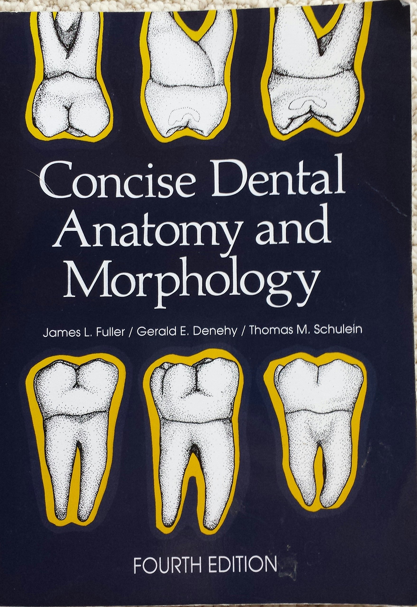 Buy Concise Dental Anatomy and Morphology Book Online at Low Prices ...