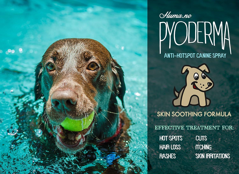 Natural Hot Spot Treatment Dogs