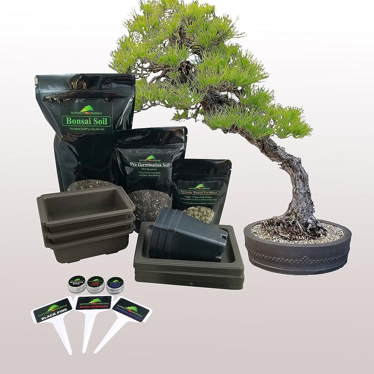 Premium Bonsai Tree Starter Seed Kit Japanese Black Pine, Japanese Wisteria, Dawn Redwood - with Bonsai Pots(Traditional Bonsai Kit)