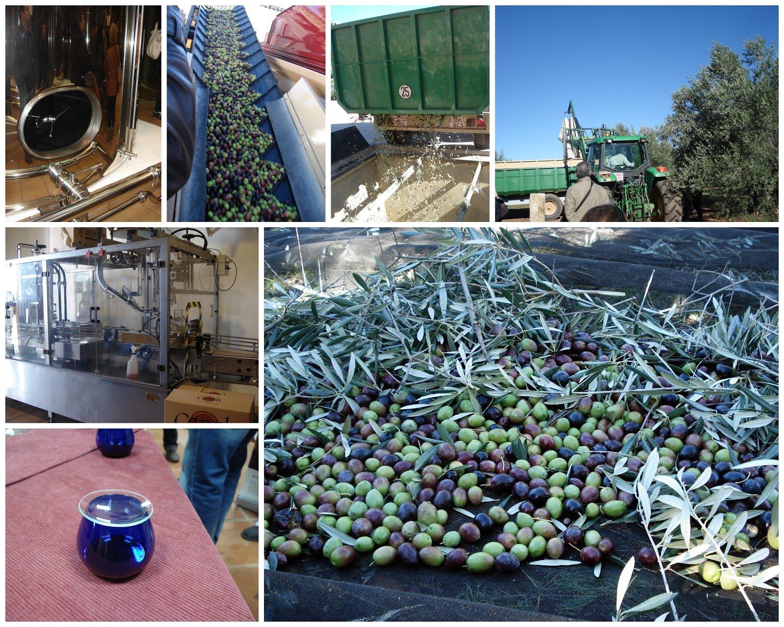 3 bottles Oro Bailen Family Reserve - Extra Virgin Olive Oil, New Harvest 2017, 17-Ounce / 500 ml by Oro Bailen (Image #6)